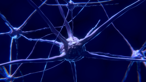 Cannabinol Neurons CBD Anxiety